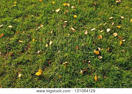 Outdoor Playground, Poor Grass At End Of Footbal  Season With First Colorful Leaves