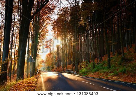Tarmac road with the line across the colorful autumn forrest with the big trees