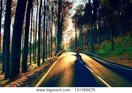 Dark Sphalt Road With The Line Across The Colorful Autumn Forrest With The Big Beech Trees
