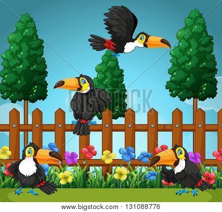 Toucans flying in the garden illustration