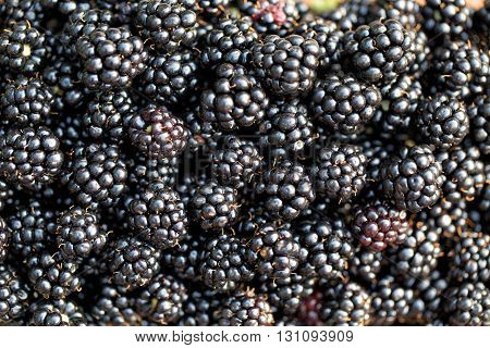 Fresh ripe blackberries. Food background. Fresh blackberries.