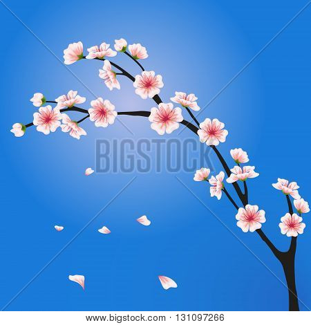 Vector sakura branch. Realistic floral asian design for invitation greeting wedding cards websites brochures booklets in japanese style. Hanami festival spring flowers