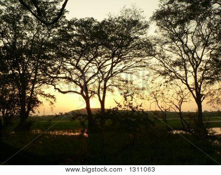 Sunset Through A Lake