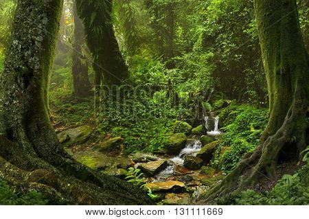Deep and dense tropical jungle in Southeast Asia
