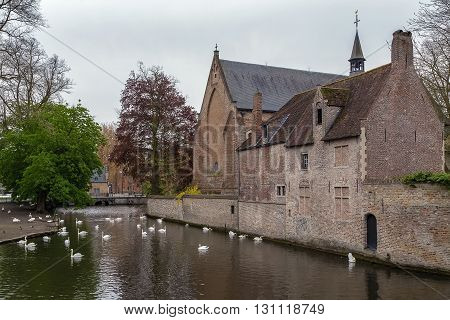 Swans on the lake of love in Bruges Belgium