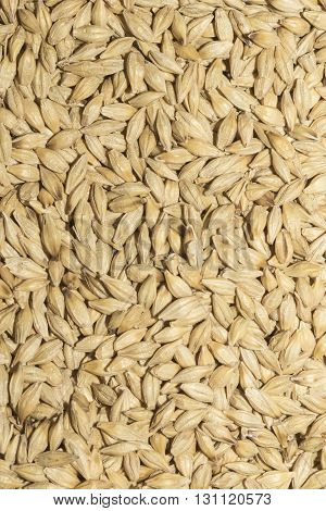 Heap of raw wheat pattern as background