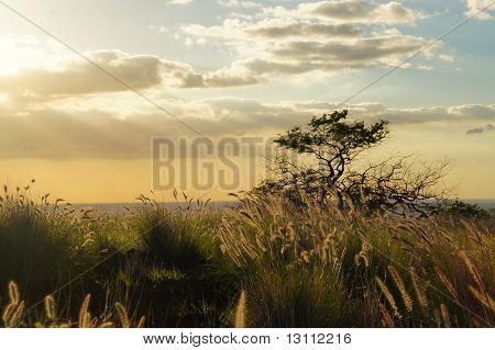 Prairie Ocean