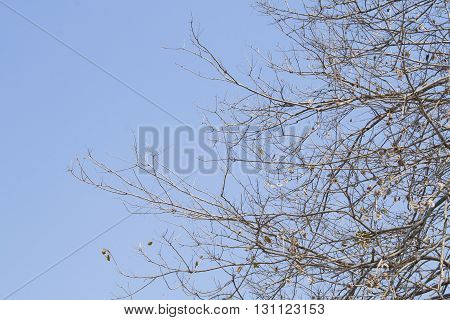 background nature branch sprig brown beautiful sky