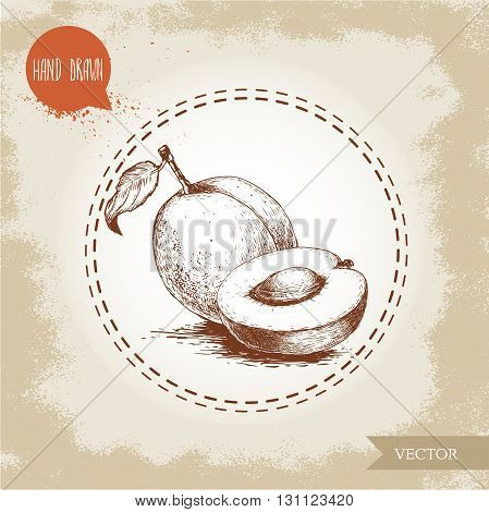 Hand drawn ripe aprocots isolated on vintage background. Retro sketch style vector eco food illustration