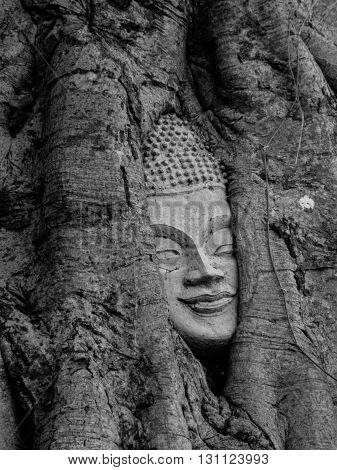 Buddha in the tree at temple in  Ayutthaya province,thailand