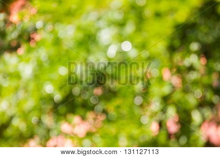 Fresh Summer Colour Green Tone Soft Bokeh Abstract Background