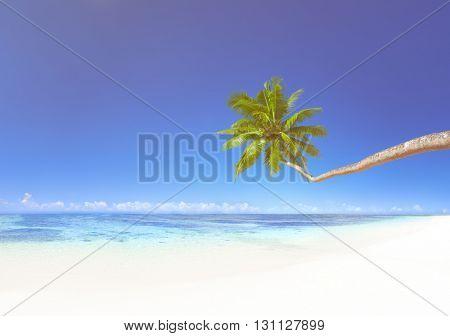 Coconut Palm Tree on Beach Concept