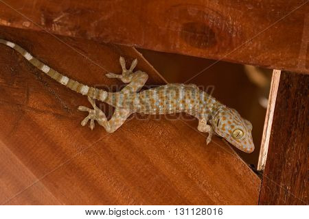 close up of gecko climbing on wooden wall