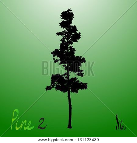 Pacific northwest pine old growth evergreen tree silhouette.