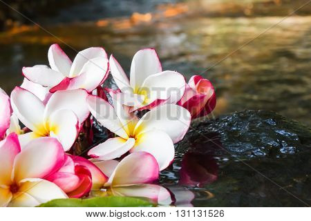 Pink White And Yellow Flower Plumeria Or Frangipani On Water And Waterfall Rock In Crystalline Strea