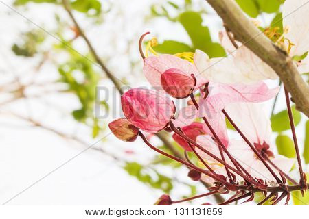 Flower Bunch Focused At Pink Bud On Nature Fresh Green Background