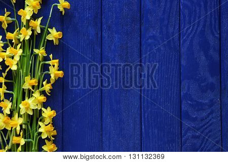 Beautiful narcissus flowers on wooden background