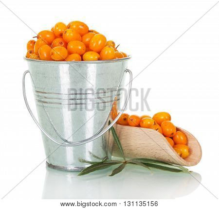 Sea-buckthorn berries in the bucket and scoop isolated on white background.
