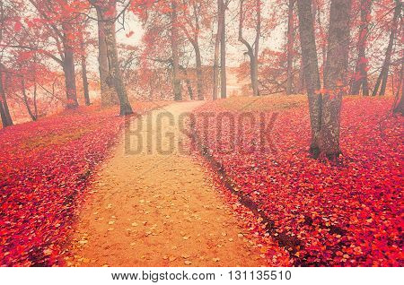 Autumn alley in foggy weather with red fallen leaves soft focus processing - colorful autumn landscape in cloudy weather