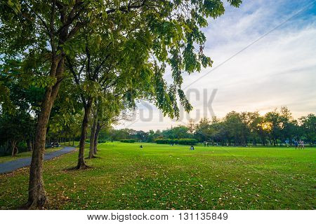 Green Park With Tree At Sunset
