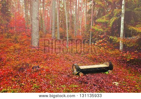 Autumn foggy landscape with wooden bench made of log in the forest. Soft filter applied
