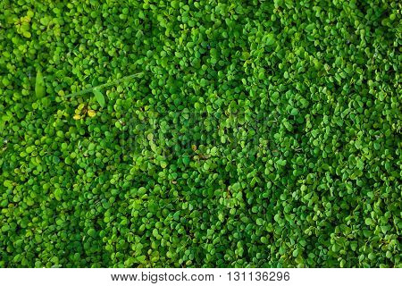 Green grass seamless texture. nature green background