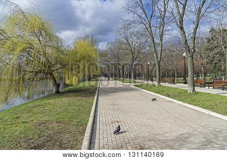 Pedestrian walkway on the bank of a pond. Moscow. Mid-April.