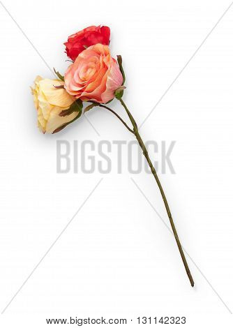 Three Roses With Clipping Path