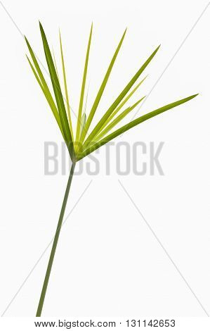 Green grass isolated on white background with clipping path from ant's view