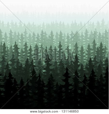 Nature forest landscape pine fir. Nature forest pine trees