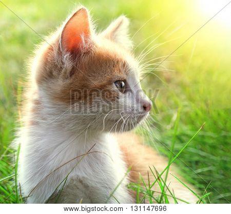 little kitten on green grass