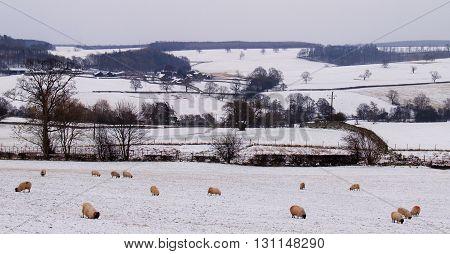 Snowy winters day in rural england lakeland