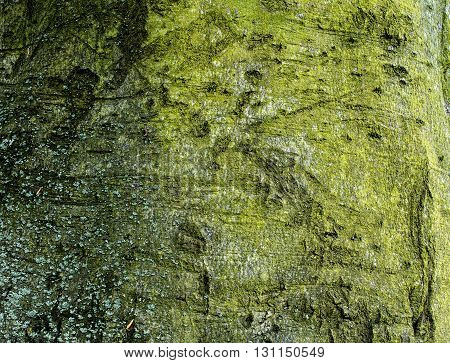 mossy tree bark for background or texture