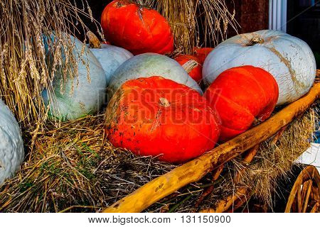 Colorful pumpkins and straw in the cart
