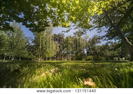Green trees in park and blue sky with sunlight