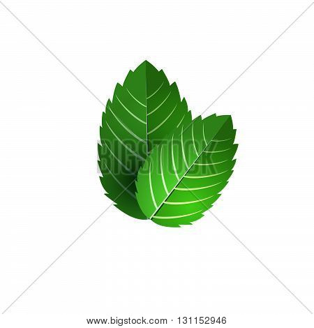Leaf Of Fresh Mint. Bunch Of Mint Vector Object. Green Mint Leaf Isolated. Mint Cocktail. Mint For C