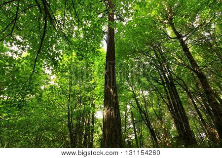 a picture of an exterior Pacific Northwest forest in spring