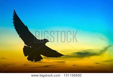 Silhouetted of seagull flying at colorful sunset