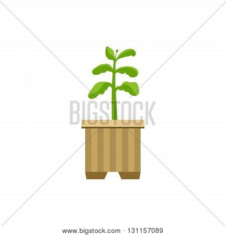 Sprout in A Crate Bright Color Simple Style Flat Vector Illustrations On White Background