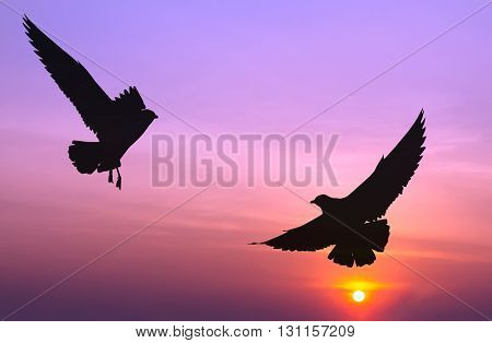Silhouetted two seagull flying at colorful sunset