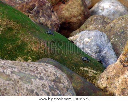 Krabben In einen Stein in der Nähe von dem Stuhl