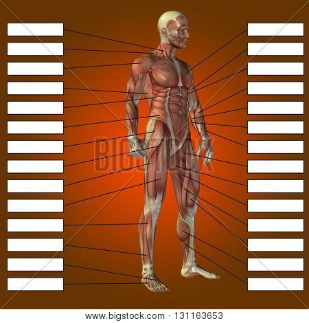 3D illustration of a concept or conceptual 3D male or human anatomy, a man with muscles and textbox on red gradient background