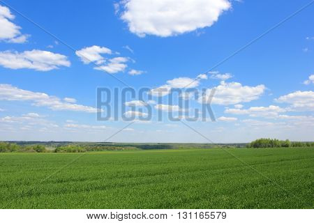 Green field over the blue sky photo