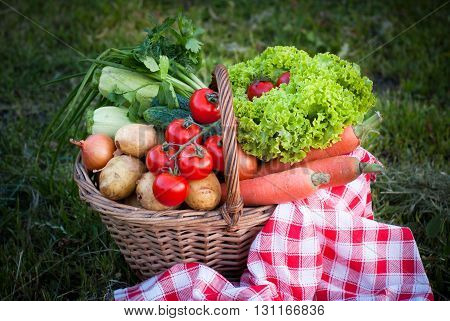 Basket with fresh farm vegetables in the grass. Picnic. Healthy food.