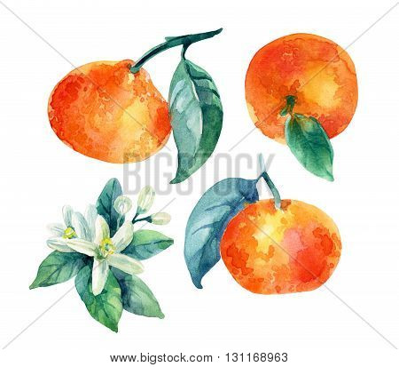 Watercolor mandarine orange fruit set with leaves and blossom isolated on white background. Orange citrus tree. Mandarin bloom. Tangerine with leaves branch flower. Hand painted illustration