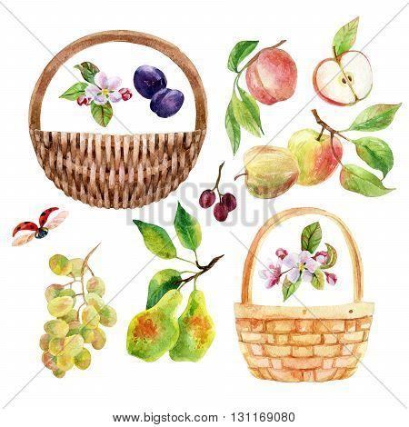 Watercolor fruit berry and wicker basket set. Apple pear peach grape branch with leaves. Watercolor apple pear peach grape plum isolated on white background. Fruit set. Hand drawn illustration