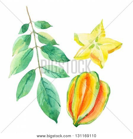 Star fruit watercolor set. Watercolor carambola isolated on white background. Hand painted food ingredients illustration
