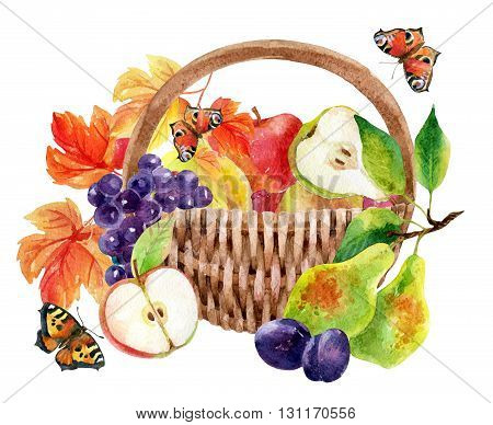 Fruits and berries in basket. Watercolor grapes apples pears and plums. Hand painted illustration isolated on white