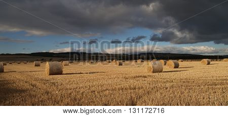Bales in a field after harvest time