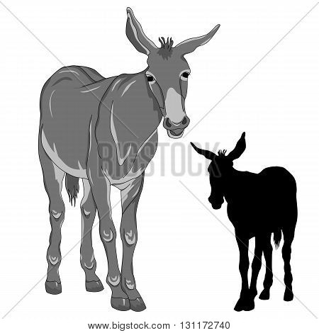 donkey  black silhouette vector illustration realistic gray